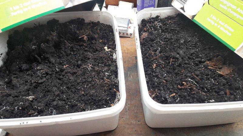 Schicht im Aldi-Pilz-Karton: Da wächst nix mehr