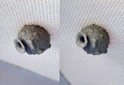 Dieses etwa zwei Zentimeter große Nest hat ein bislang unbekanntes Insekt den Sonnenschutz-Stoff geklebt