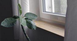 Fensterbrett fertig verputzt und verfugt. Da fühlt sich auch die Frangipani wohl.